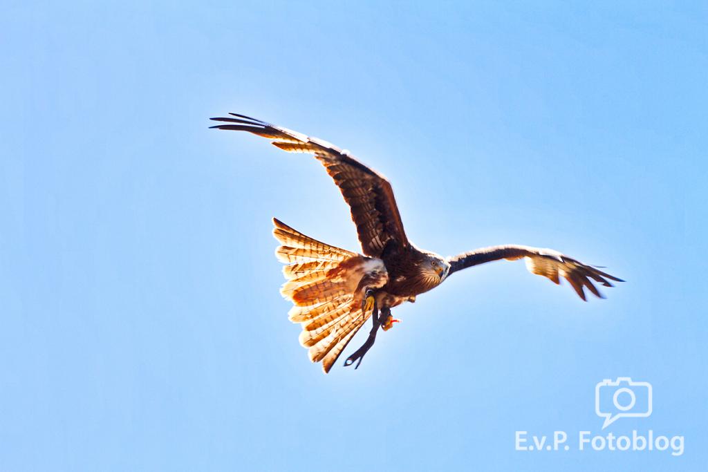 20140518-VogelParkSteinen-011.png