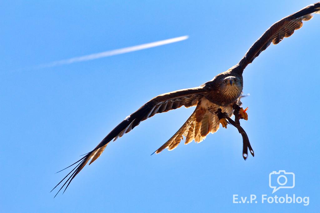 20140518-VogelParkSteinen-001.png