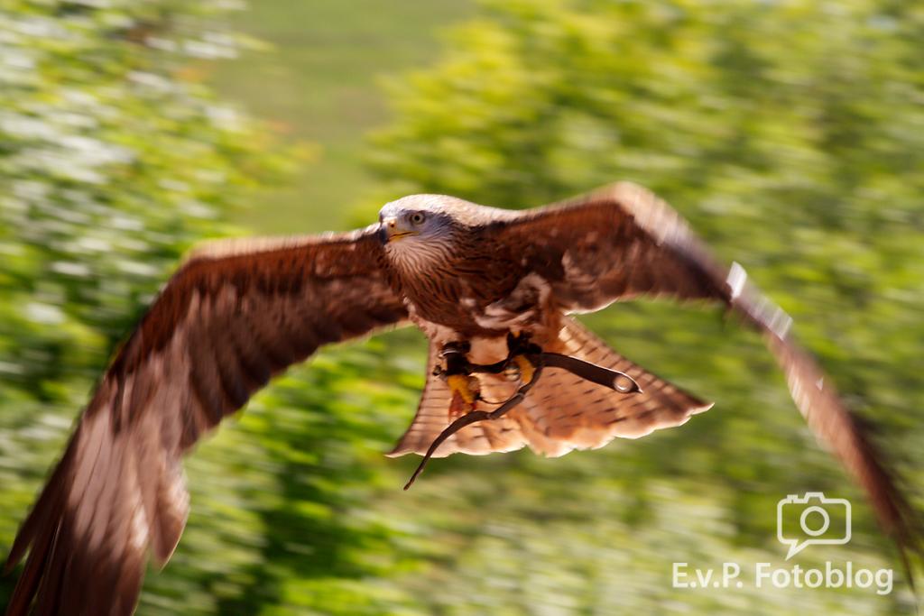 20140518-VogelParkSteinen-002.png