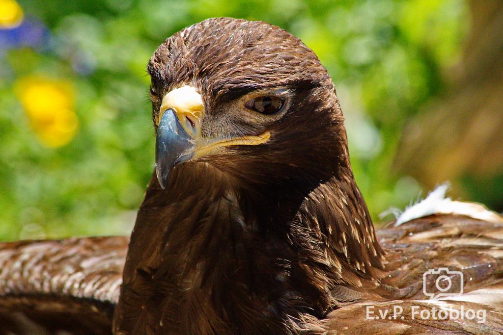 20140518-VogelParkSteinen-007.png