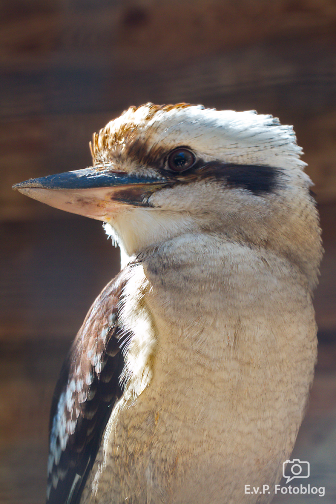 20140518-VogelParkSteinen-008.png