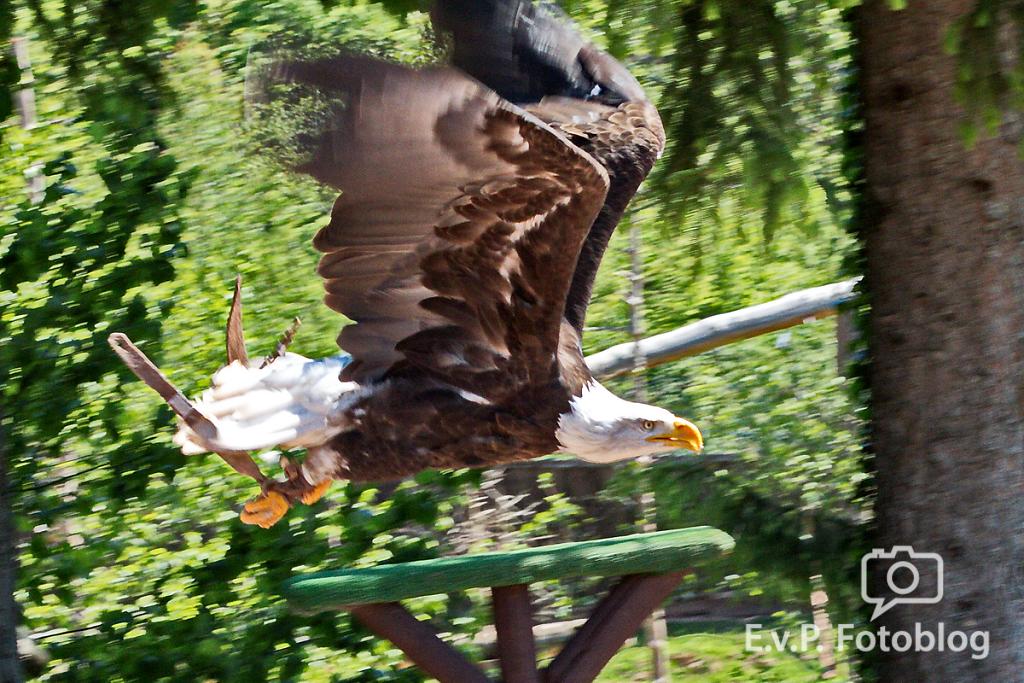 20140518-VogelParkSteinen-009.png