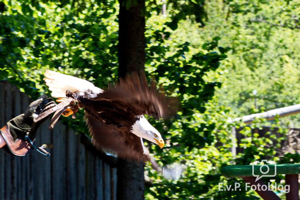 20140518-VogelParkSteinen-010.png