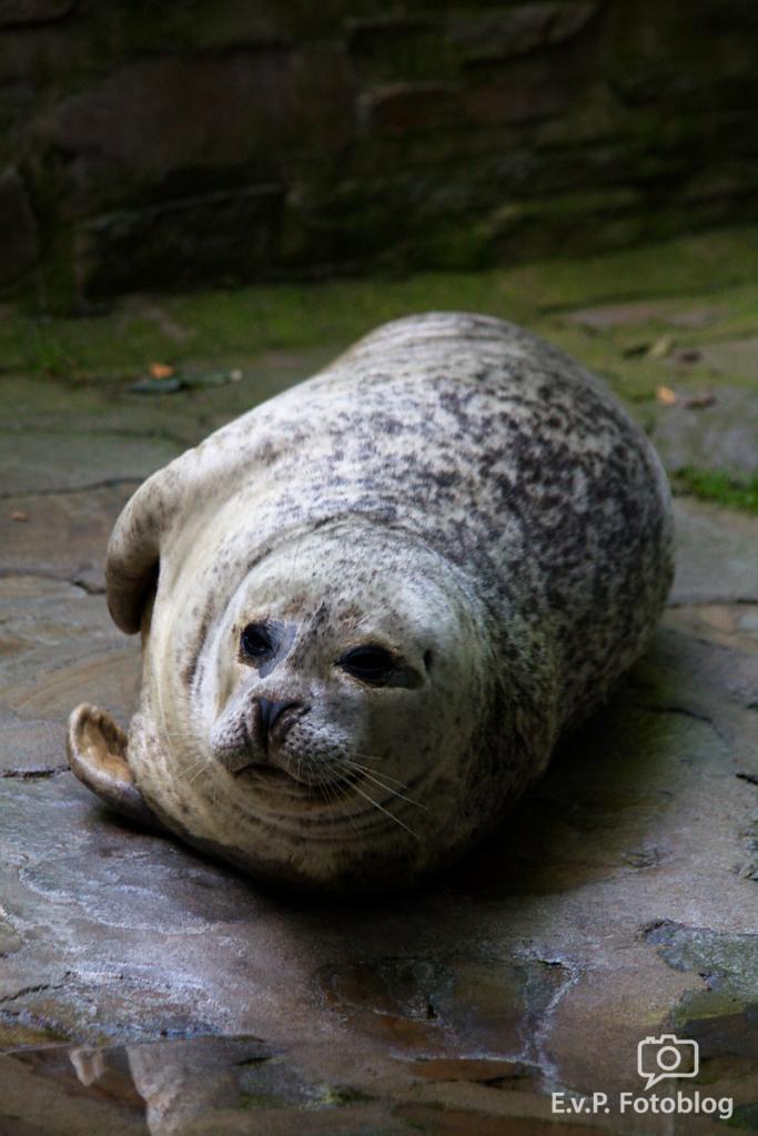 Zoo-Duisburg-0812-011.png