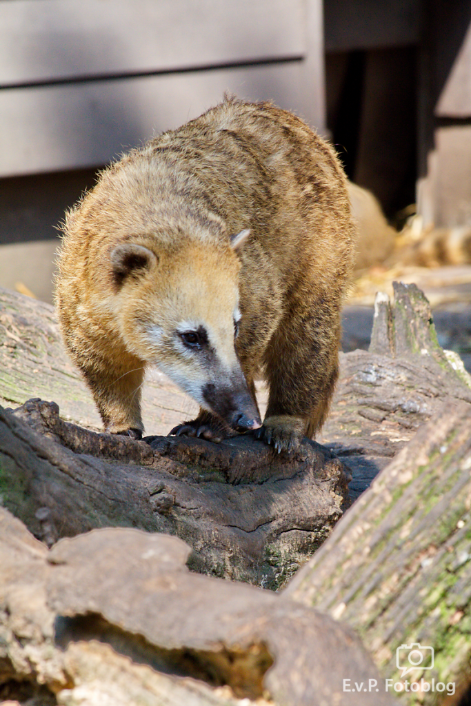 Zoo-Duisburg-0812-019.png