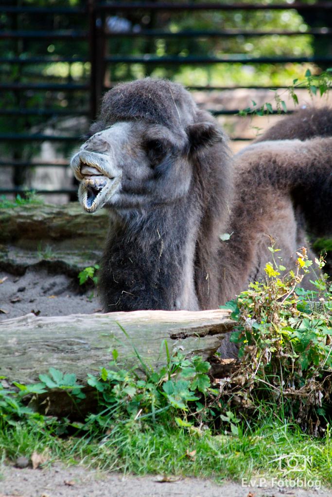Zoo-Duisburg-0812-020.png