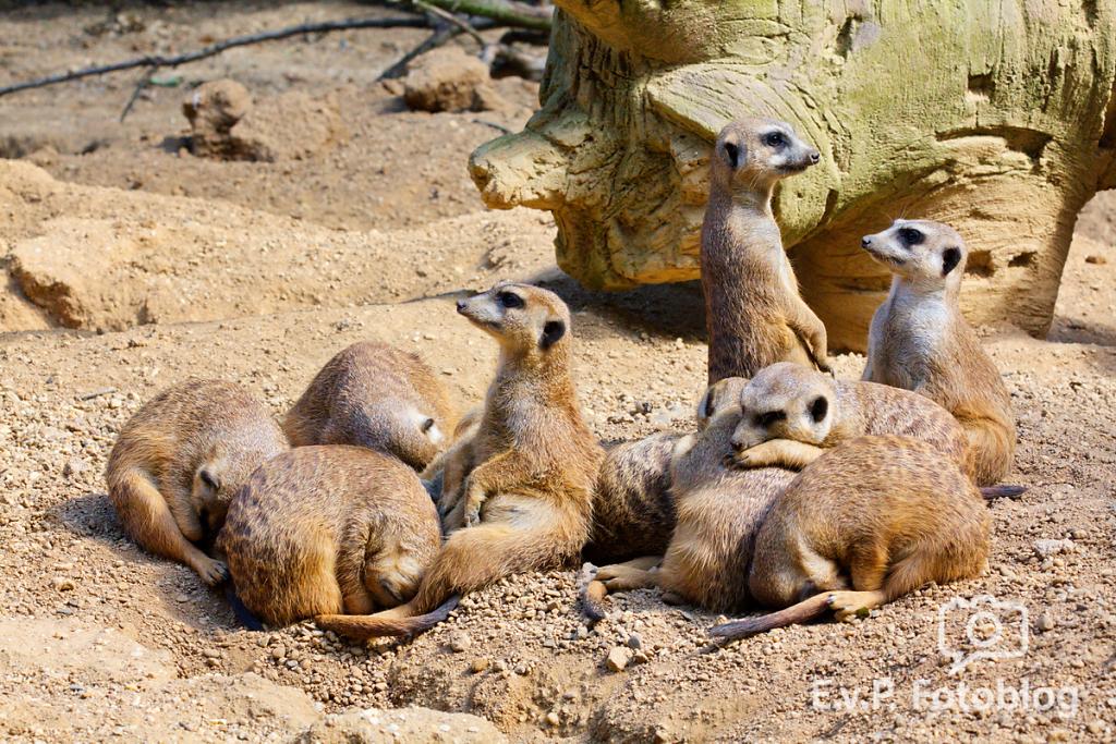 Zoo-Duisburg-0812-024.png