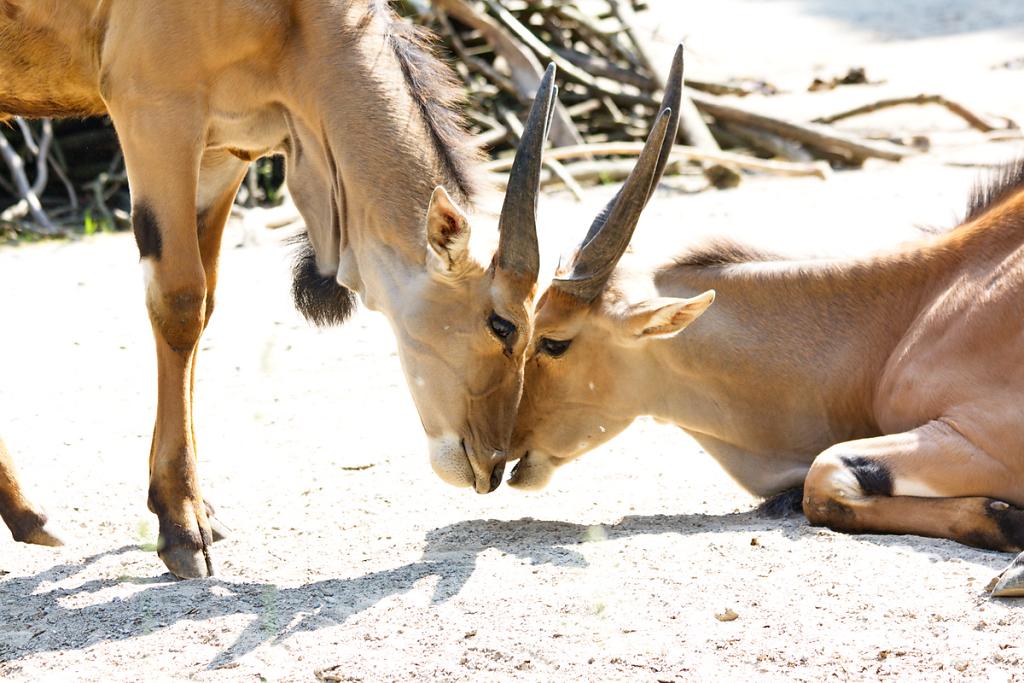 Zoo Wuppertal 2012 (EvP)