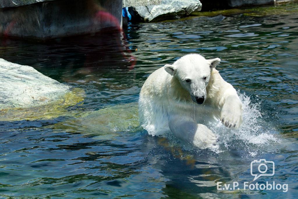 Zoo-Juni-006.png
