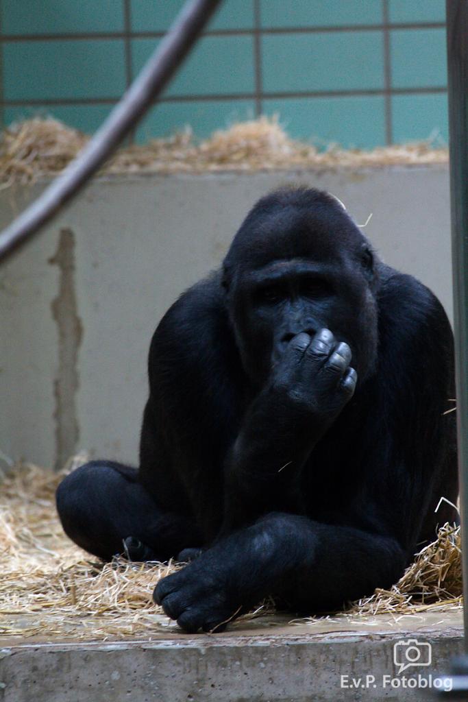Zoo-Juni-008.png