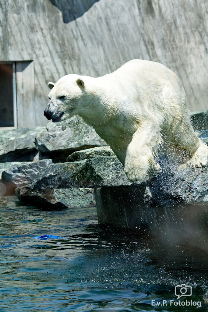 Zoo-Juni-012.png