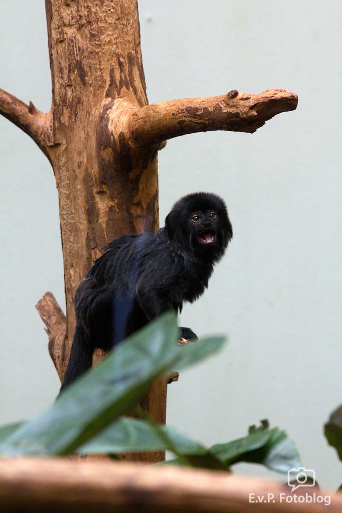 Zoo-Juni-013.png