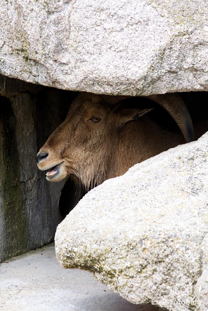 Zoo-Juni-025.png