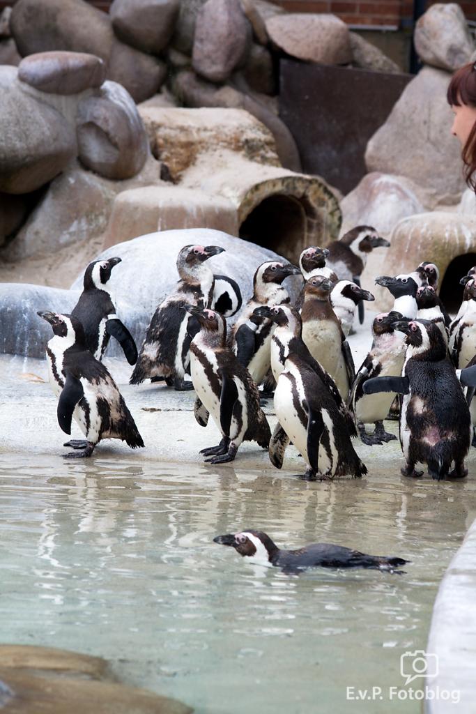 Zoo-Juni-027.png