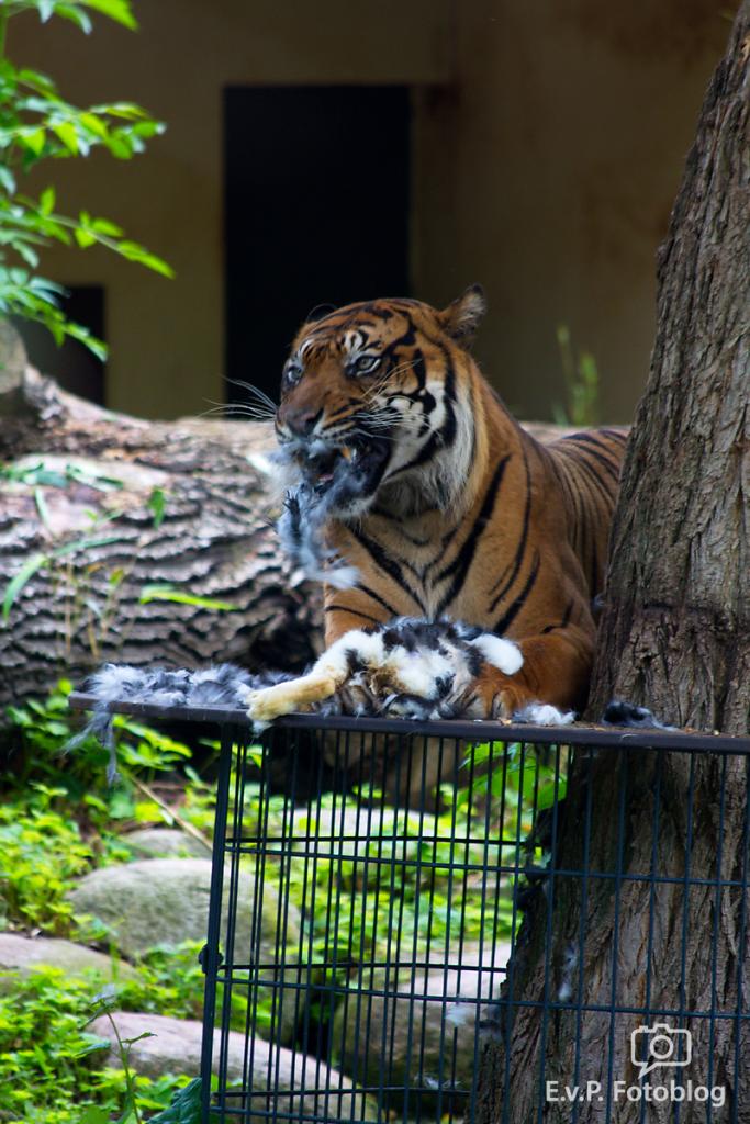 Zoo-Juni-030.png