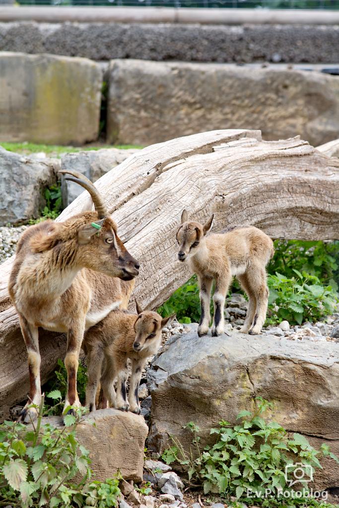 Zoo-Juni-032.png