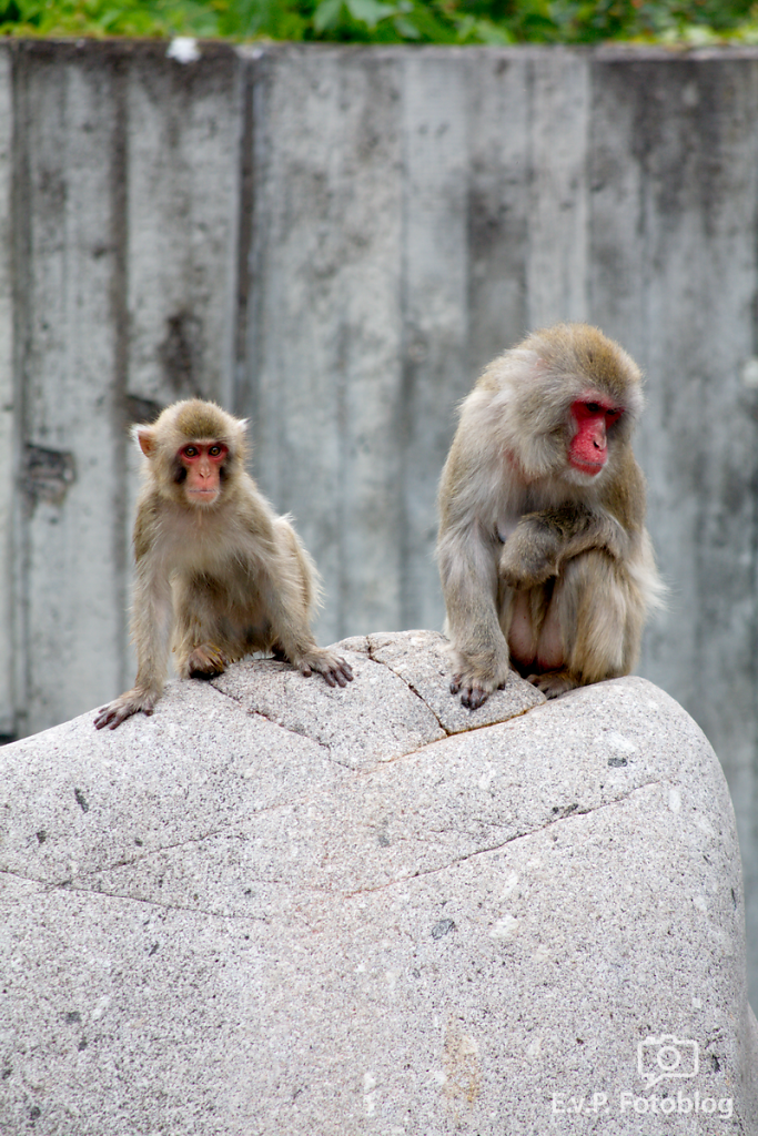 Zoo-Juni-033.png