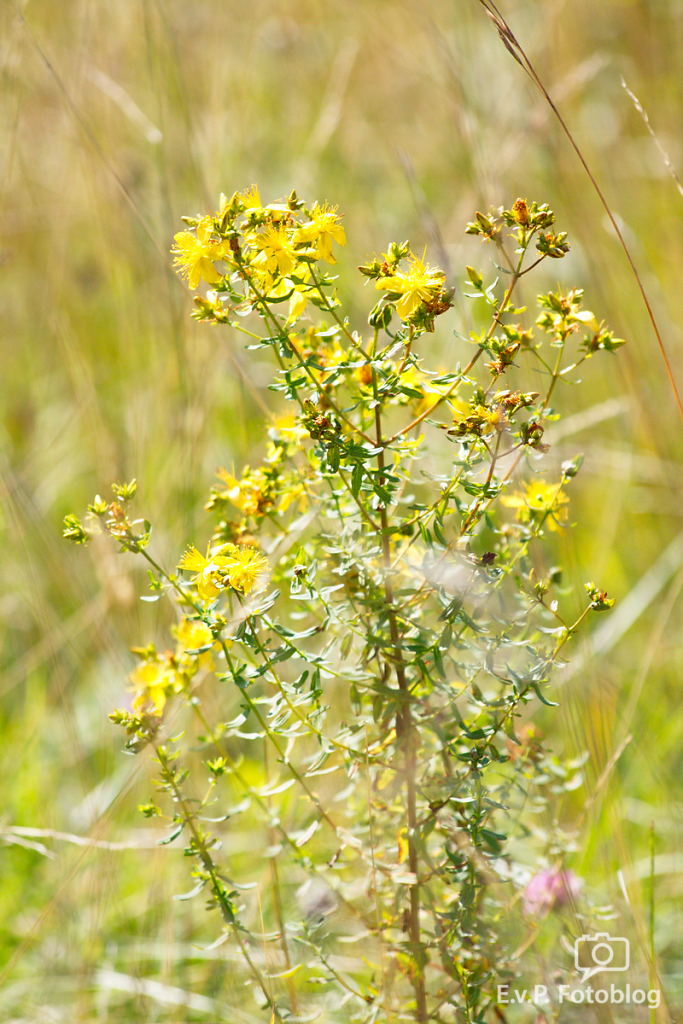 NaturPur-Juli2012-008.png