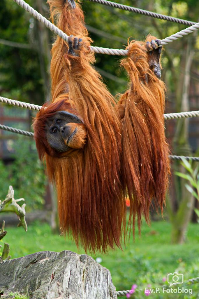Zoo Gelsenkirchen 2014 (EvP)